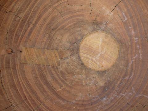 埋木補修・拡大