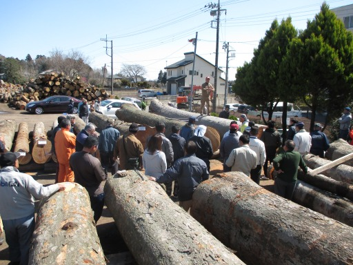 ケヤキ原木市場